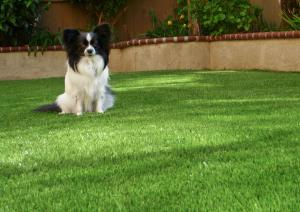 OmegaTurf dog fluffy
